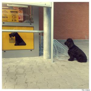 Pies bez koszyczka