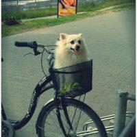 Pies wkoszyczku. Foto: Milena Wójtowicz