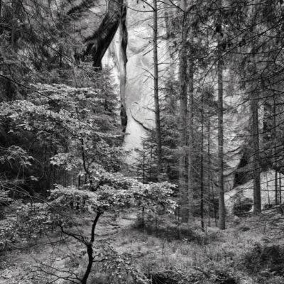 Drzewko w Skalnym mieście Adršpach