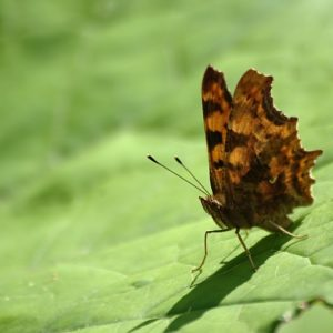 Read more about the article Motyl II