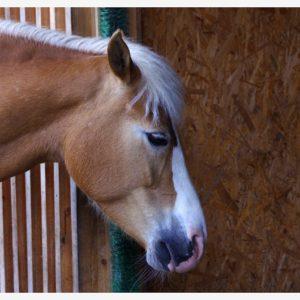 Wrocławskie ZOO (13) – koń