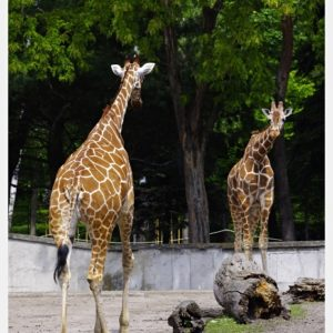 Read more about the article Wrocławskie ZOO (31)