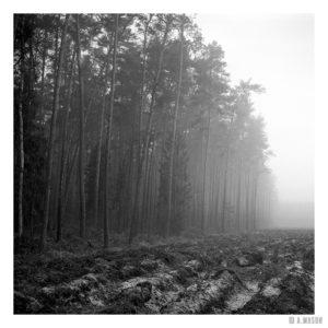 Ściana lasu
